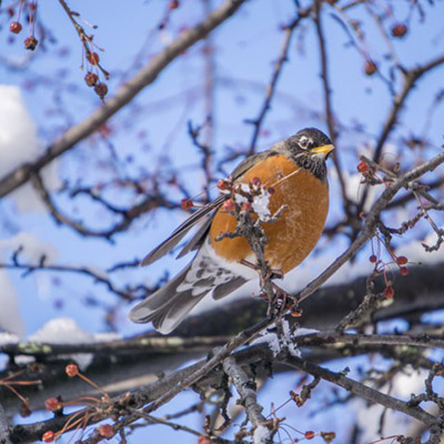 boston-hiver-neige-16